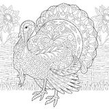Turkey farm bird and sunflowers. Coloring page of turkey and sunflowers on the farm yard. Freehand sketch drawing for Thanksgiving Day greeting card or adult vector illustration