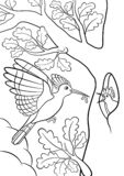 Coloring pages. Mother hoopoe feeds her little cute baby. In the forest vector illustration