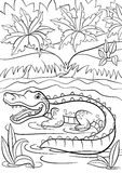 Coloring pages. Animals. Little cute alligator sits in the lake. Royalty Free Stock Photo