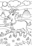 Coloring pages. Animals. Little cute goat. Royalty Free Stock Photo
