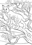 Coloring pages. Animals. Little cute lynx. Stock Image