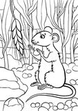Coloring pages. Animals. Little cute mouse. Stock Photography