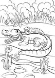 Coloring pages. Animals. Mother alligator Stock Photos