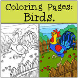 Coloring Pages: Birds. Beautiful rooster. Stock Photo