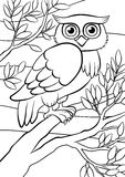 Coloring pages. Birds. Cute owl. Royalty Free Stock Photography