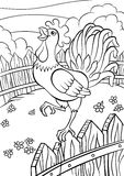 Coloring pages. Birds. Cute rooster. Stock Images