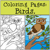 Coloring Pages: Birds. Little cute owl. Coloring Pages: Birds. Little cute owl sits on the tree branch Stock Images