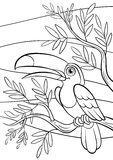 Coloring pages. Birds. Little cute toucan. Royalty Free Stock Photo