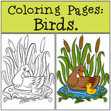 Coloring Pages: Birds. Mother duck with her little cute duckling. Coloring Pages: Birds. Mother duck with her little cute duckling in the small pond Stock Image