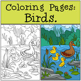 Coloring Pages: Birds. Mother duck with her little cute ducklings. Coloring Pages: Birds. Mother duck with her little cute ducklings in the pond Royalty Free Stock Photo