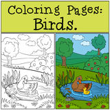 Coloring Pages: Birds. Mother duck swims with her little cute duckling. Coloring Pages: Birds. Mother duck swims with her little cute duckling in the pond Royalty Free Stock Photography