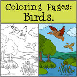 Coloring Pages: Birds. Two little cute ducks. Coloring Pages: Birds. Two little cute ducks fly under the pond Royalty Free Stock Image