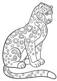 Coloring pages. Cute spotted jaguar smiles. Stock Photography