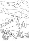 Coloring pages. Farm animals. Little cute goatling smiles. Coloring pages. Farm animals. Little cute goatling stands on the field smiles. He has a bell on the Royalty Free Stock Image