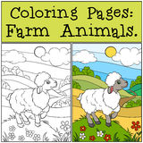 Coloring Pages: Farm Animals. Little cute sheep. Stock Image