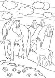 Coloring pages. Farm animals. Mother horse with foal. Coloring pages. Farm animals. Mother horse with her little cute foal on the field Royalty Free Stock Photography