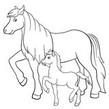Coloring pages. Farm animals. Mother horse with foal. Coloring pages. Farm animals. Mother horse walks with her little cute foal Stock Photo
