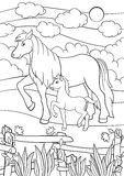 Coloring pages. Farm animals. Mother horse with foal. Coloring pages. Farm animals. Mother horse walks with her little cute foal on the field Royalty Free Stock Photography