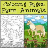 Coloring Pages: Farm Animals. Mother horse with her foal. Coloring Pages: Farm Animals. Mother horse walks with her little cute foal Stock Photo