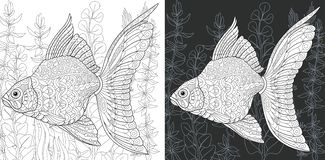 Coloring pages with Gold Fish. Coloring Page. Coloring Book. Colouring picture with Gold Fish drawn in zentangle style. Antistress freehand sketch drawing royalty free illustration
