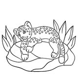Coloring pages. Little cute baby jaguar on the stone. Stock Image