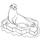 Coloring Pages Mother Seal With Her Little Cute Baby Stock Photography