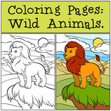 Coloring Pages: Wild Animals. Cute beautiful lion . Royalty Free Stock Image