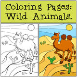 Coloring Pages: Wild Animals. Cute camel. Stock Photography