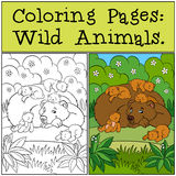 Coloring Pages: Wild Animals. Daddy bear  Stock Photo