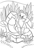 Coloring pages. Wild animals. Little cute baby fox looks at the bug. Stock Photos