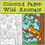 Coloring Pages: Wild Animals. Little cute baby tiger. Coloring Pages: Wild Animals. Little cute baby tiger lays in the tree branch and smiles Stock Image