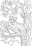 Coloring pages. Wild animals. Little cute baby tiger. Stock Images