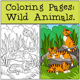 Coloring Pages: Wild Animals. Little cute baby tigers. Coloring Pages: Wild Animals. Little cute baby tigers smiles Stock Image