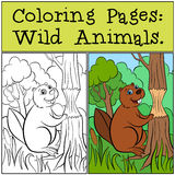Coloring Pages: Wild Animals. Little cute beaver. Royalty Free Stock Image