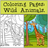 Coloring Pages: Wild Animals. Little cute giraffe. Royalty Free Stock Photography