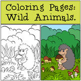 Coloring Pages: Wild Animals. Little cute hedgehog . Royalty Free Stock Photography