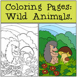 Coloring Pages: Wild Animals. Little cute hedgehog. Stock Photography
