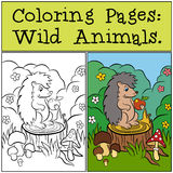 Coloring Pages: Wild Animals. Little cute hedgehog. Royalty Free Stock Photo
