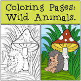 Coloring Pages: Wild Animals. Little cute hedgehog . Royalty Free Stock Photos