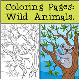 Coloring Pages: Wild Animals. Little cute koala. Stock Photo