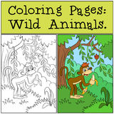 Coloring Pages: Wild Animals. Little cute monkey. Stock Image