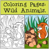 Coloring Pages: Wild Animals. Little cute squirrel. Royalty Free Stock Photo