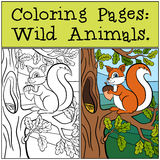 Coloring Pages: Wild Animals. Little cute squirrel . Royalty Free Stock Photos