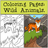 Coloring Pages: Wild Animals. Little cute tiger. Stock Photography
