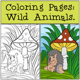 Coloring Pages: Wild Animals. Mother hedgehog with her little cute baby hedgehog. Coloring Pages: Wild Animals. Mother hedgehog with her little cute baby Royalty Free Stock Photography