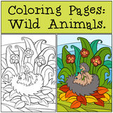 Coloring Pages: Wild Animals. Mother hedgehog holds little cute baby hedgehog. Stock Photography