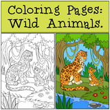 Coloring Pages: Wild Animals. Mother jaguar with her cub. Stock Image