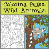 Coloring Pages: Wild Animals. Mother lemur with her baby. Coloring Pages: Wild Animals. Mother lemur stands on the tree branch with her little cute baby and royalty free illustration