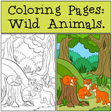 Coloring Pages: Wild animals. Three little cute baby foxes in the forest. Royalty Free Stock Photo