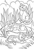 Coloring pages. Wild animals. Three little cute baby tigers. Royalty Free Stock Images